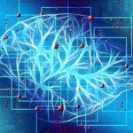 Gli effetti della meditazione sul cervello