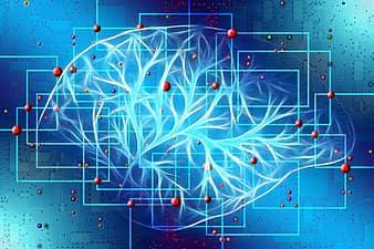brain-pikist.com